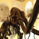 Z wizytą w Muzeum Geologicznym